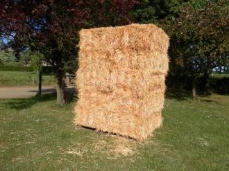Medium bale Wheat Straw