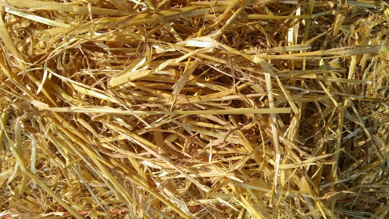 barley straw big bales