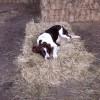 WHS - Meadow Hay